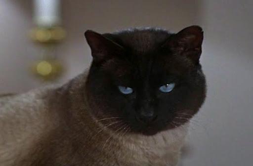 That Darn Cat Cats On Film