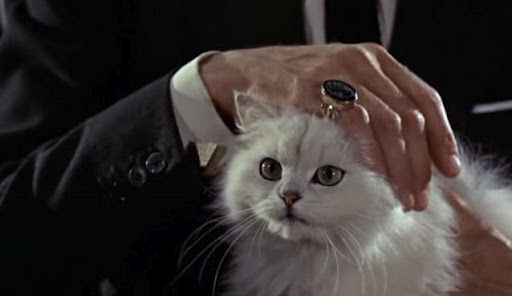 diamonds are forever cat