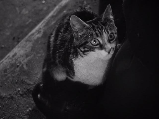 THE THIRD CAT