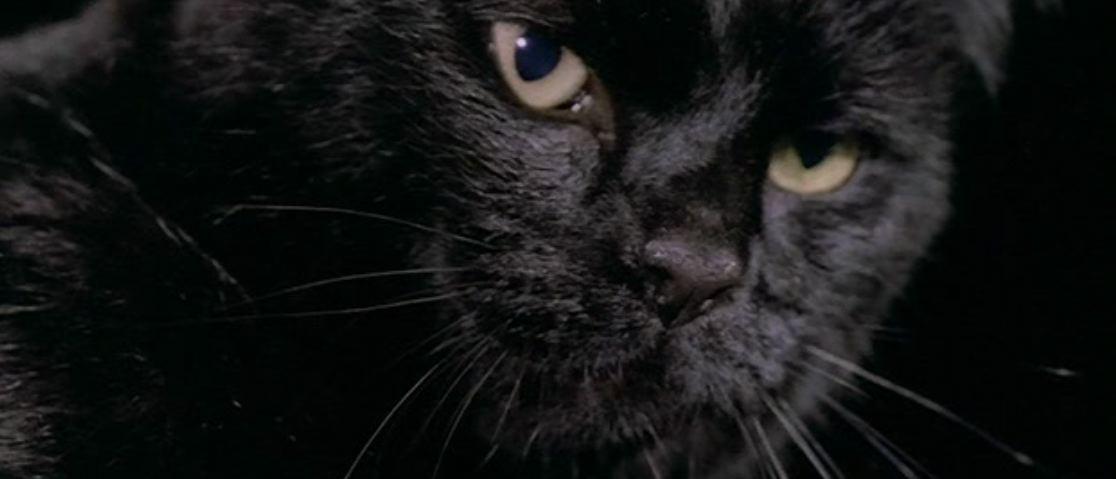 Cat Black Scratching Pole