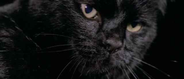 blackcatfulci02