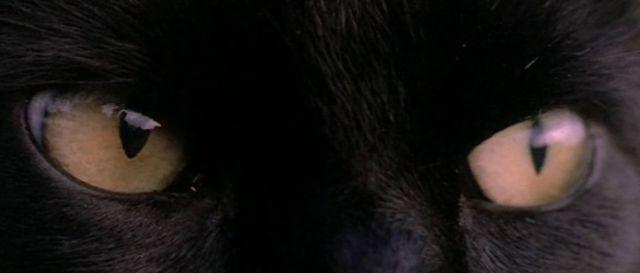 blackcatfulci03