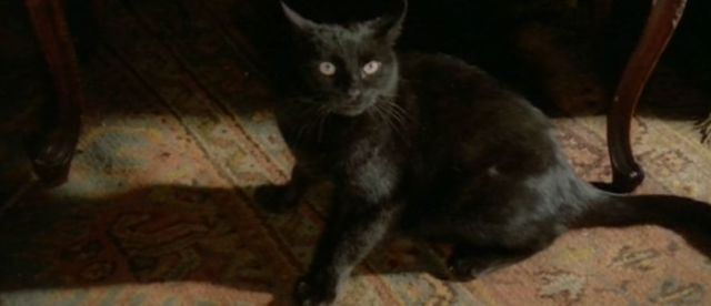 blackcatfulci06