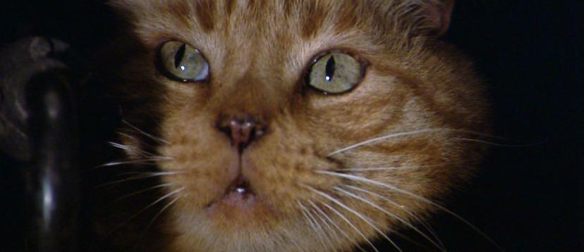 Image result for jones alien cat