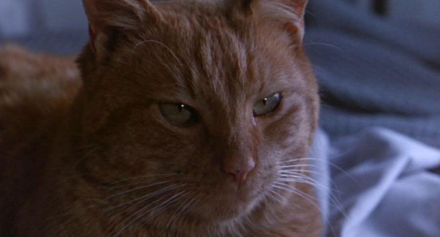 Alien Movie Ripley Cat