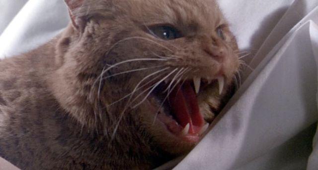Alien Nostromo Cat Name